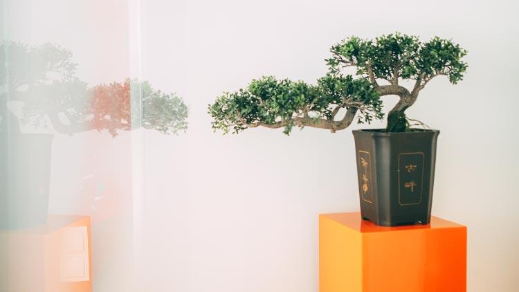 Schöne Deko wie das Bonsaibäumchen auf einer orangefarbenen Säule lässt die Wurzelkanalbehandlung fast vergessen.