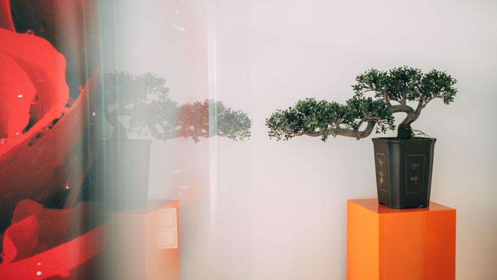 Schöne Deko wie das Bonsaibäumchen auf einer orangefarbenen Säule sorgt für stilvolle Atmosphäre in der Praxis zahn-B in Strausberg.